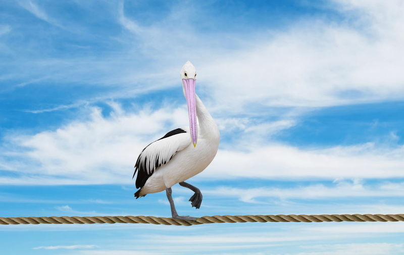 Animal Themes Animal Wildlife Animals In The Wild Beauty In Nature Bird Cloud - Sky Day Nature No People One Animal Outdoors Pelican Perching Sky Water White Color