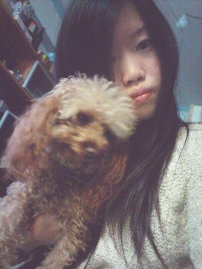 Dog HongKong Girl Cute Poodle