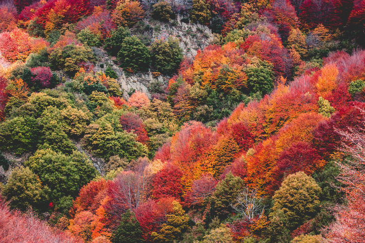 Full Frame Shot Of Autumn Trees In Forest