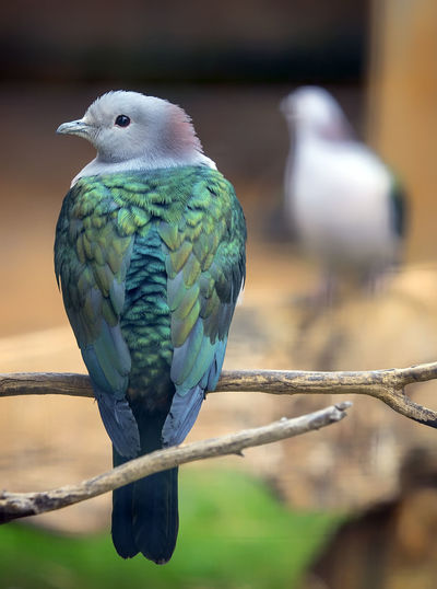 Animal Animal Themes Animal Wildlife Animals In The Wild Beak Bird Branch Close-up Day Focus On Foreground Full Length Looking Metal Nature No People One Animal Outdoors Parrot Perching Vertebrate