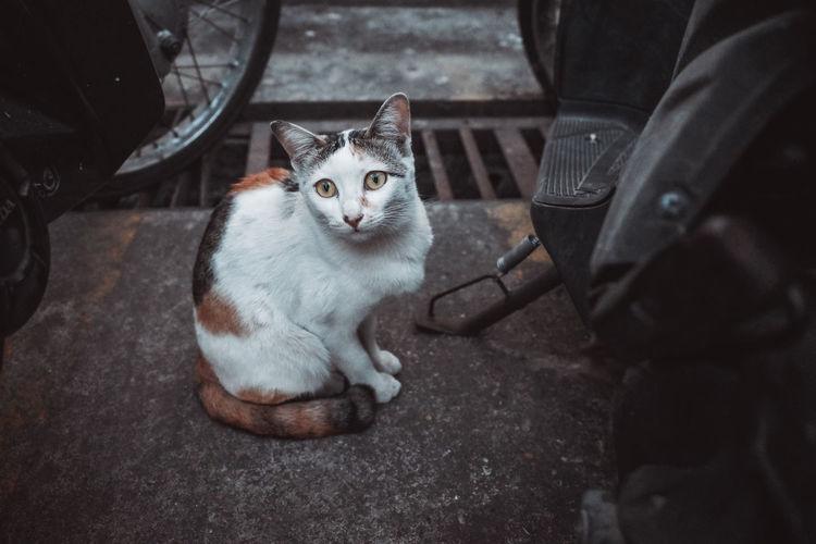 Cat life animal life