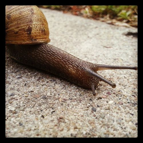 Justasnail Fastestsnail Imnotslow You 'rejusttoodamnfast fastandthefurious stopreadingmytags youjustdid