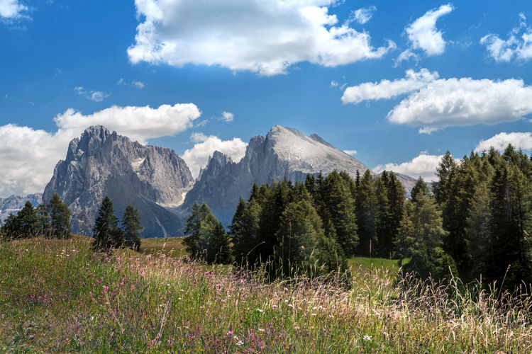 Seiser Alm Südtirol Dolomites, Italy Hiking Langkofel Langkofel Group Langkofelgruppe Plattkofel Südtirol Wanderlust Beauty In Nature Cloud - Sky Day Grass Landscape Landscapes Mountain Mountain Peak Mountain Range Nature No People Outdoors Scenics - Nature Seiser Alm Sky Sudtiroloaltoadige Tree