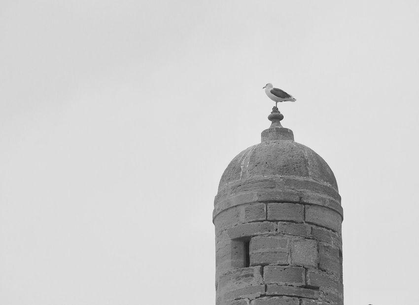 Blackandwhite Bird Birds Bird Photography Black And White Black & White Blackandwhite Photography Black And White Photography Black&white Architecture