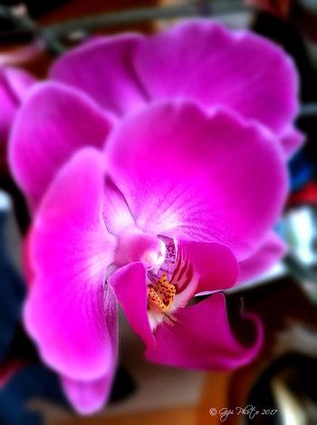 Flower Petal Orchid Nature
