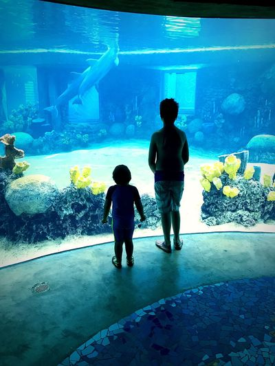 Aquarium Real People Leisure Activity Two People Rear View Animals In Captivity Childhood Lifestyles Sea Life Sea World San Antonio, TX Watching Boys Child Standing Indoors  Water Togetherness Silhouette EyeEmNewHere The Week On EyeEm Dolphins EyeEm Best Shots