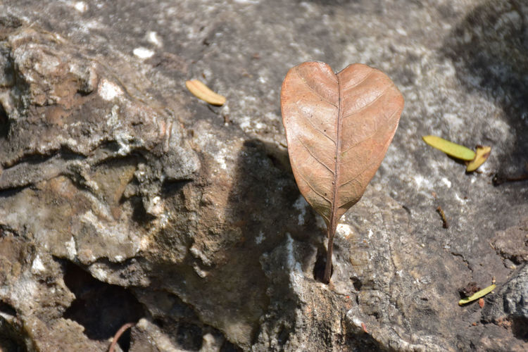 dry heart Close-up Day Dry Leaves Leaf Leave In Heart Shape Nature No People Outdoors