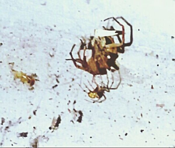 The smaller spider caught the bigger spider in its web then killed and ate it. Spider Web Spiders Spiders In My Garage EyeEm New Jersey Spiderporn EyeEm Gallery EyeEm Smartphone Photography