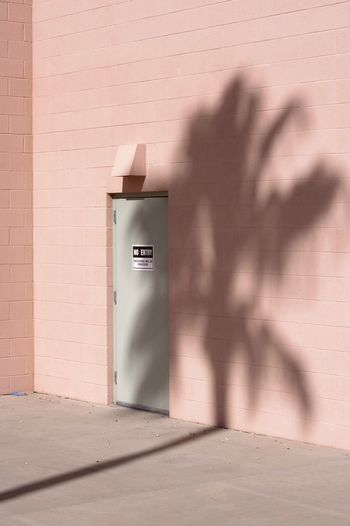 Pine tree shadow on wall of building