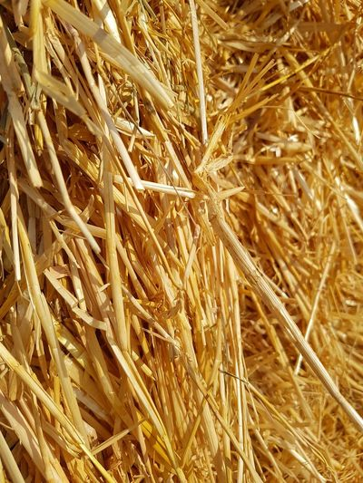Full Frame Backgrounds Agriculture Growth Cereal Plant Plant Wheat No People Nature Close-up Ear Of Wheat Outdoors Day Grass Beauty In Nature Strow Shear Strow Hut Field Agricolture Work Country Summer Wheat Food And Drink Perspectives On Nature