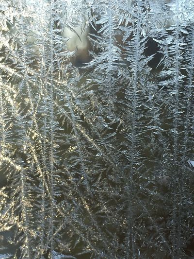 Jack Frost drew on the porch windows It's Cold Outside 4/366 Nature IPhoneography Jack Frost Frosty Mornings EyeEm Nature Lover IPS2016Nature IPS2016Closeup