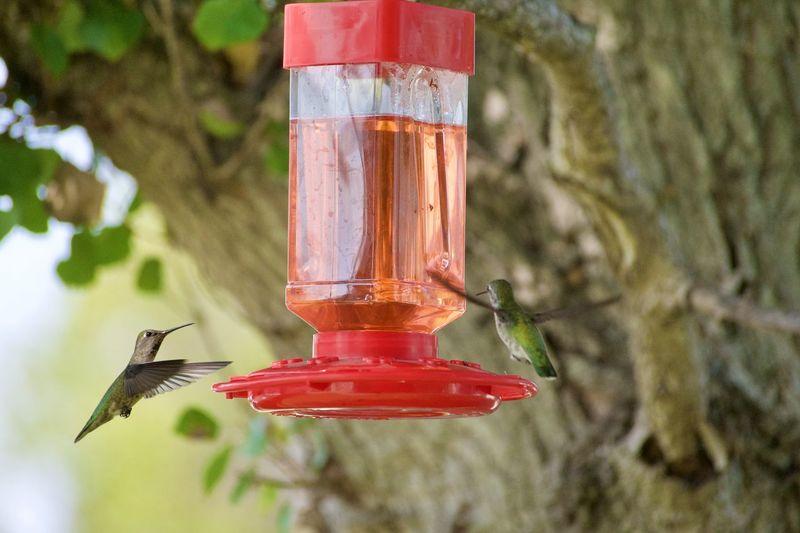 Close-up of bird feeder
