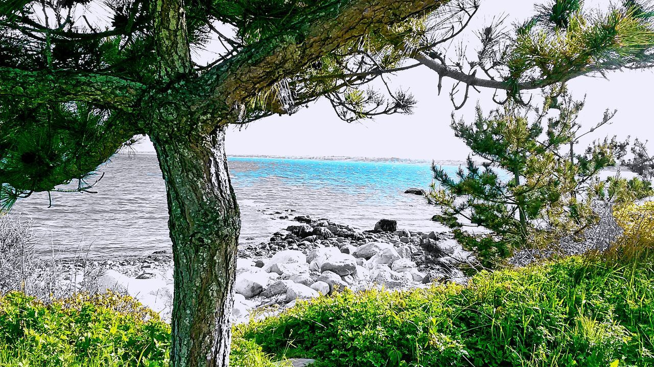 tree, nature, beauty in nature, water, scenics, day, sea, tree trunk, green color, outdoors, tranquil scene, tranquility, growth, no people, sky, grass