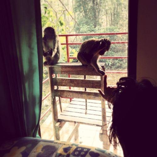 Réveil par les Singes ce matin à Kao Sok ! Kaosok Thailand Travel voyage nature