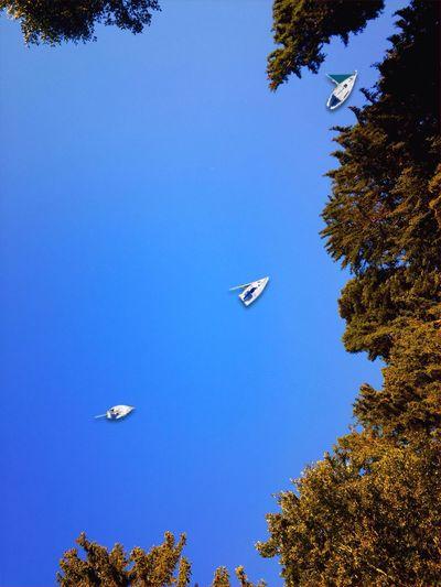 A Bird's Eye View See, Regatta, Vogelperspektive, Segelschiffe, Bäume, Wald, iPadografie, iPhoneography