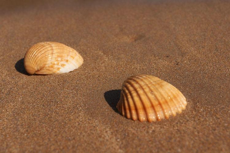 Close-up of seashell on sand