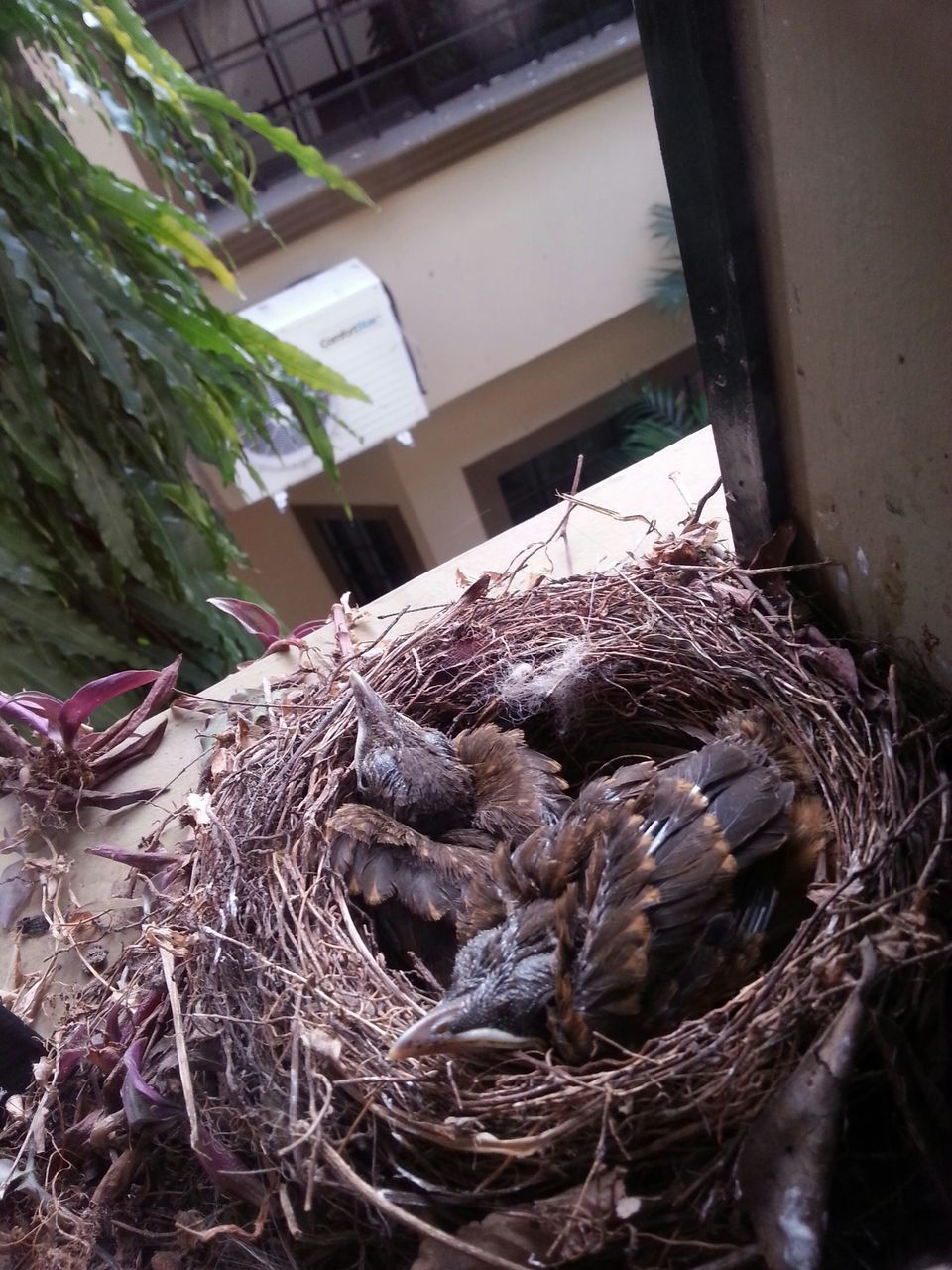 High Angle View Of Young Birds In Nest On Window