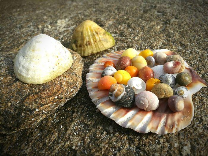 Close-up of seashells at beach