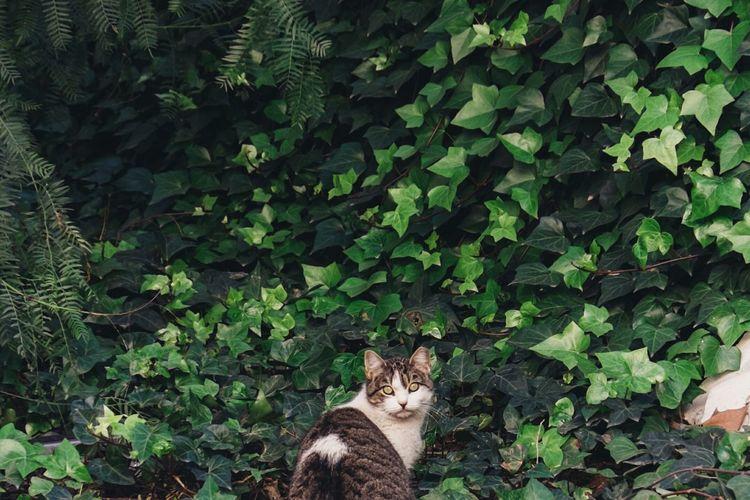 Portrait Of Cat On Plants