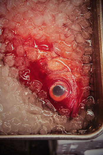 Japanese Food On Ice Tokyo,Japan Animal Themes Close-up Day Eye Fish FishMarket Food Freshly Caught Freshness Indoors  No People Red Red Color