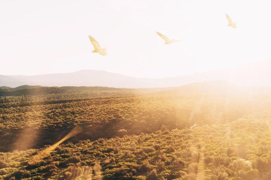 Shot from inside a train en-route to Oregon. Sunlight Sunburst Sun Flare Bright Countryside Hills Summer Birds Freedom Follow Free Fly Soar America Yellow Movement