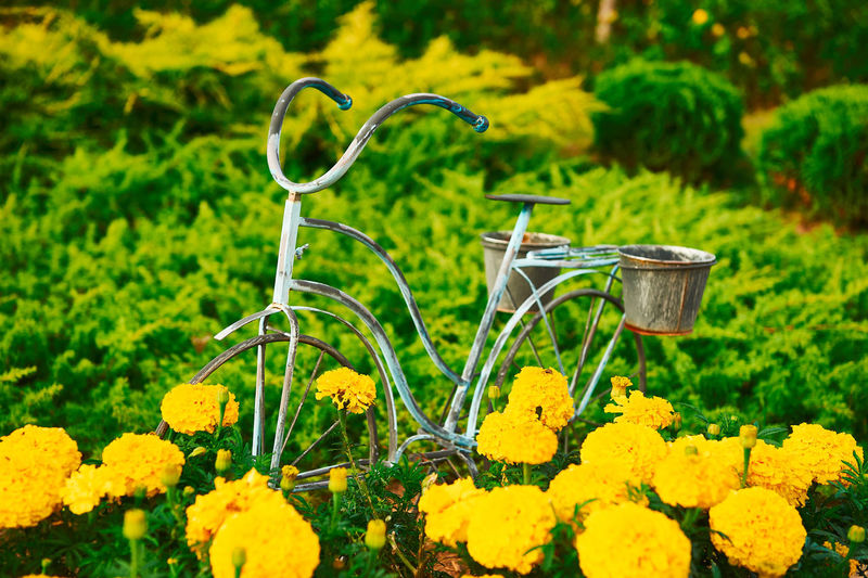 Flowers in the Garden Farm, Poland Colors Paint The Town Yellow Art Beauty In Nature Bicycle Bike Close-up Color Palette Colorful Day Flower Head Flowers Fragility Freshness Garden Photography Grass Green Color Growth Nature No People Outdoors Plant