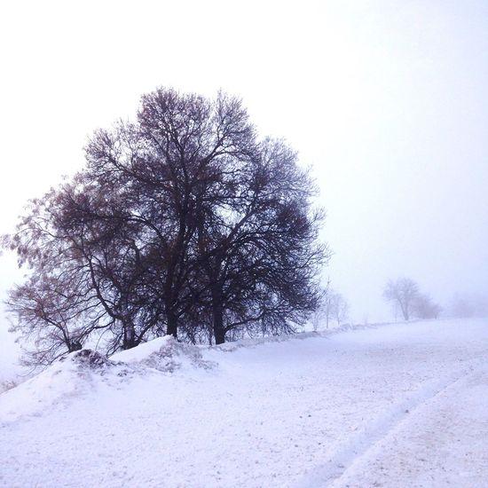 Snow Winter Outdoors Cold Nature Ankara MerryChristmas