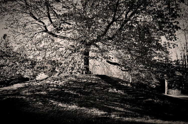 the tree on the hill (F. Nietsche) Tree Tree_collection  Treescollection Trees And Nature Surreal Dreamer's Vision Blackandwhite Blackandwhite Photography Textured  Abstract No People Black And White Photography Eyemphotography Visionary Visionary Eye