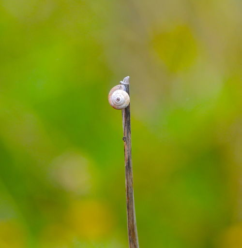 Close-up of snail on stem against blurred background
