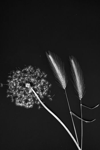 Close-up of illuminated plant against black background