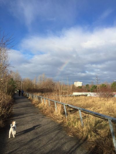 Parson Russell Terrier Rainbow Cutestterrieralive