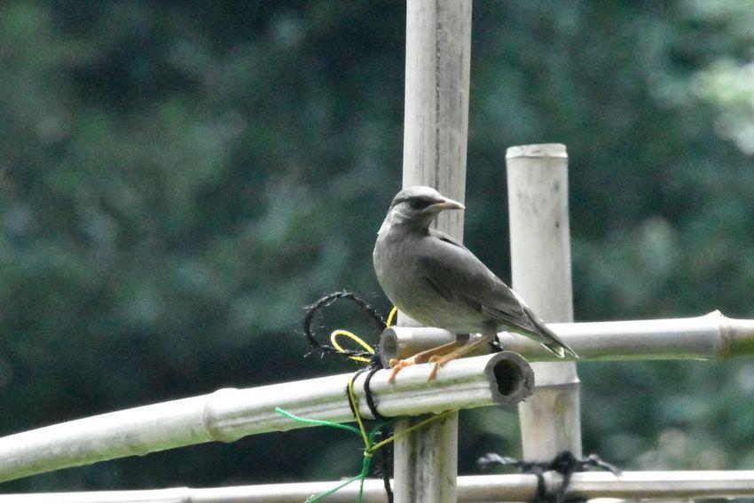 Vertebrate Bird Animal Themes Animals In The Wild Animal Wildlife Animal Perching