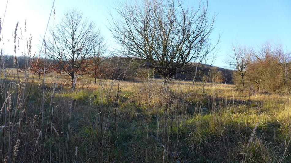 No People, Outdoors, Nature, Sunshine, Wild, Meadow, Trees, Pasture in Borzsony mountain, Hungary