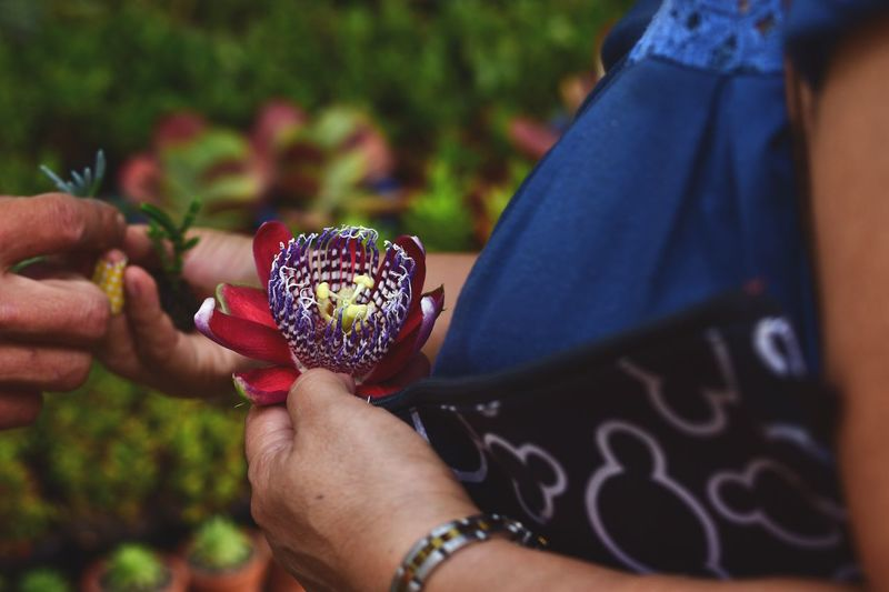 Midsection Of Woman Holding Passion Flower In Park