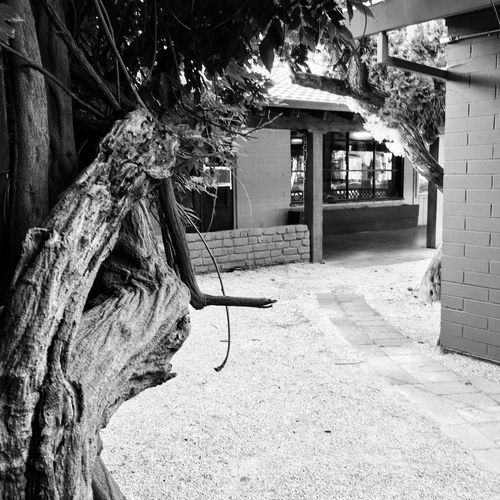 California Schwartzweiss Monochrome Blackandwhite Photography Morning Light Built Structure Architecture Building Exterior Tree Outdoors Breathing Space