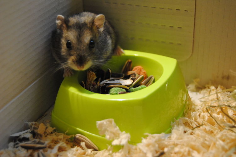 Animal Photography Domestic Animals Animal Hamster Love♥ Cute♡ Cute Pets Scared Littlelove
