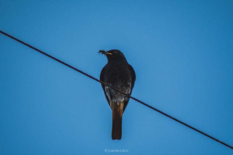 Bird Feeding