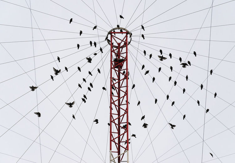 Low angle view of birds perching on chain swing ride against sky