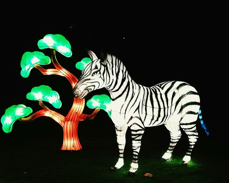 Light No People Outdoors Animal Themes Zebra Animal Night Threes Light In The Darkness Light Animal China Light Travel Destinations Stag Deer Mammal Astrology Sign