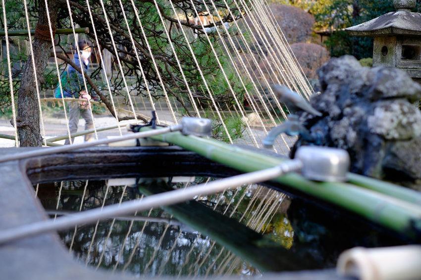 谷中の天王寺の手水舎 Fujifilm Fujifilm X-E2 Fujifilm_xseries Japan Japan Photography Temple Tokyo Xf35mm ちょうずや 天王寺 手水舎 東京 谷中 谷中霊園 谷根千