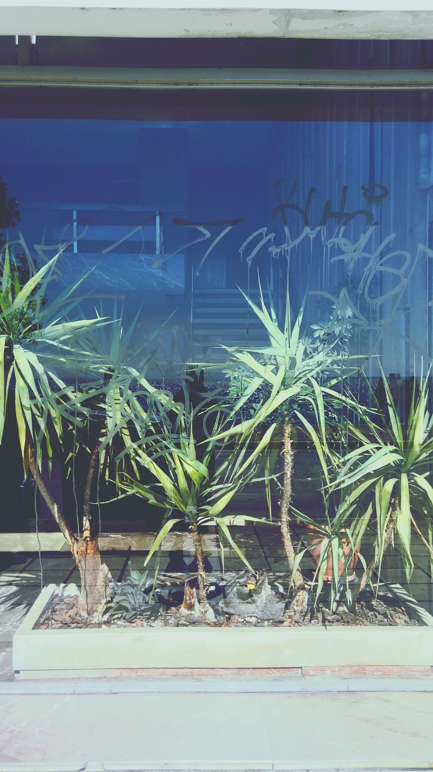 growth, plant, no people, nature, palm tree, tree, built structure, water, outdoors, day
