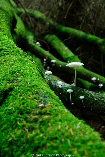 Fungai Gelt Woods Landscapes Outdoor Woods