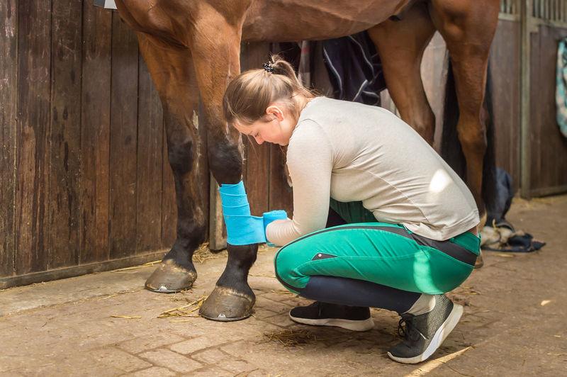 Full Length Of Woman Rolling Bandage On Horse Leg