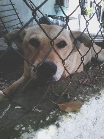 Caracas City DOG