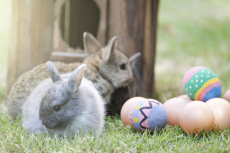 Close-up of rabbits and easter eggs on grass