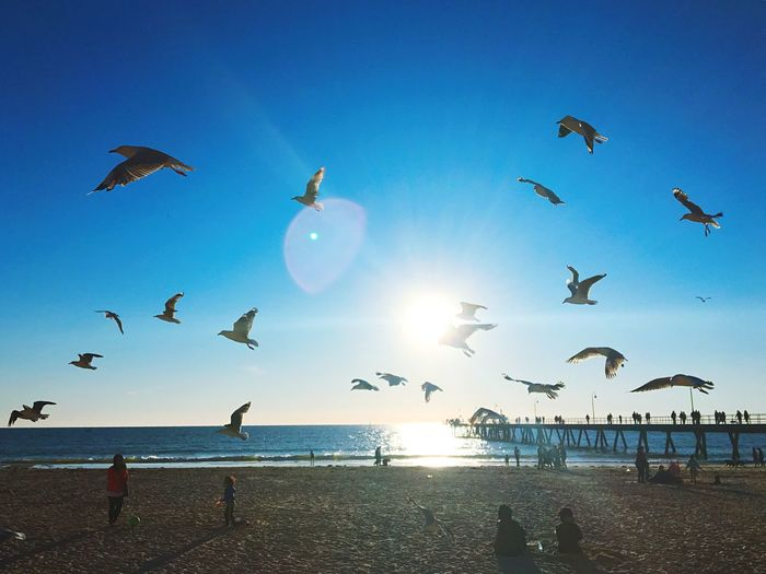 Light And Shadow Relaxing Streetphotography Travel Sky Flying Water Sea Bird Beach Blue Nature