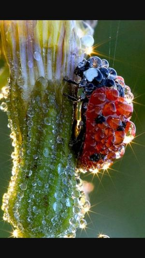 I do not know what to write i just love Nature 🐞🐞