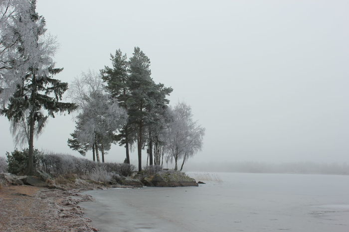 Beach Beauty In Nature Ecosystem  Fog Landscape Nature No People Outdoors Plant Sand Scenics Sea Sky Tree Water Wilderness Växjö  Sweden