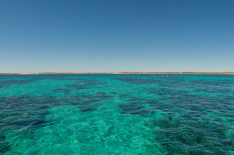 Swimming at Ningaloo Reef, Western Ausrtalia Australia Beauty In Nature Blue Blue Sky Copy Space Coral Bay Day Great Barrier Reef Horizon Over Water Landscape Nature Ningaloo Reef Reef Sea Sky Sunny Swimming Tourism Tranquil Scene Tranquility Water Western Australis