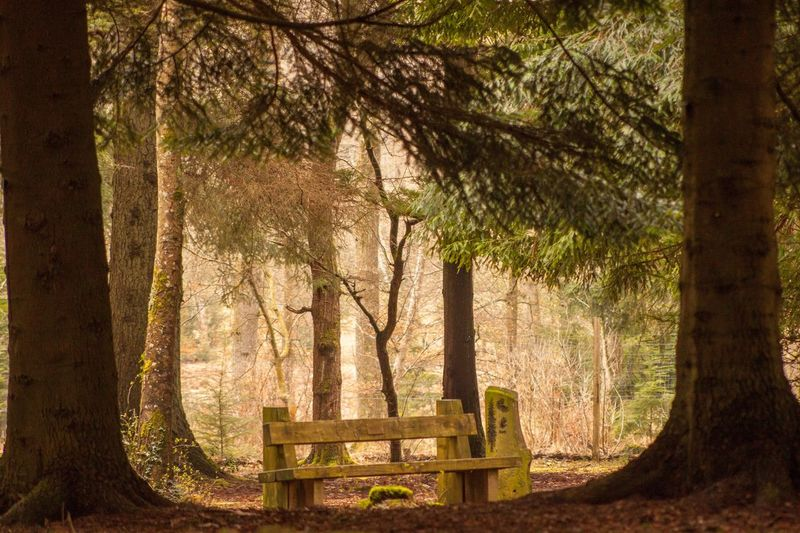Woodland rest Forest Man-made In Nature Woodlench Bench WoodLand Bench In The Woods Wood Bench Bench Tree No People Nature Outdoors Branch Day Beauty In Nature